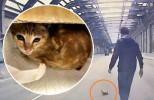 屯門公路驚見小貓地上打轉 好心司機停車救起送醫