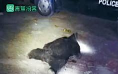川兩巨熊咬殺三村民 小孩匿草叢睹母慘死