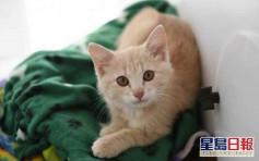 比利时家猫被主人传染确诊 吁暂勿与宠物亲密接触