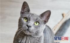 領養名種貓再配種轉售惹議 動保團體憂貓咪變「生育工具」