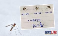 饱受蚊患缠扰每晚难眠 深圳男制「杀蚊日记」发泄怨气