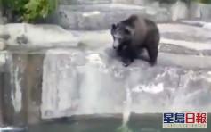 波蘭醉漢誤闖動物園跌落水 母熊救人反遭鎖喉險溺斃