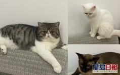 3貴價寵貓染疫遭安樂死 哈巿確診女崩潰:為甚麼貓不可隔離