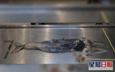 大嶼山分流西灣發現中華白海豚屍體 今年第20宗