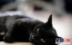 【維港會】老爺探訪指黑貓「剋佢」要求送走 新抱怒斥:憑咩嘢?