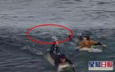 衝浪遇鯊魚襲擊 法國客連出兩拳保命