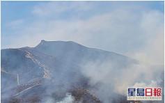 重陽節新界多處山火 消防半日接數十宗求助