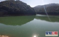 【維港會】缺德山友疑餵魚影響水質 大潭水塘現大量麵包皮