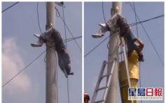电讯工人触电 倒吊电线杆上幸无生命危险