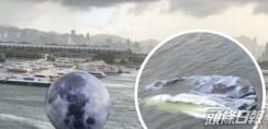 觀塘海濱巨月被風吹走 漏氣隨海漂流秒變生根