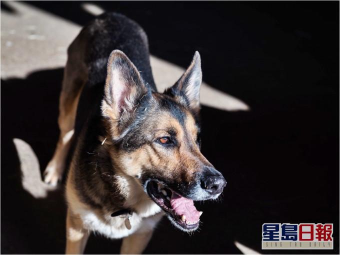 杭州父母疑「重男轻女」,不给女儿打疯狗症疫苗致脑死亡。示意图